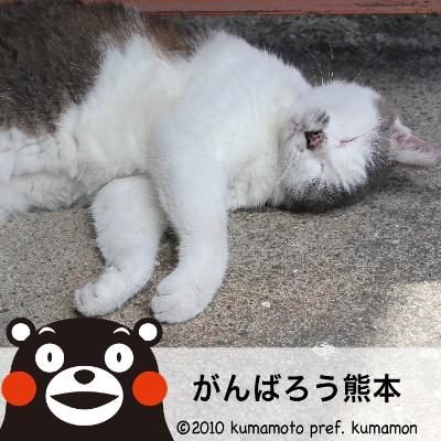 kumamon_image.png